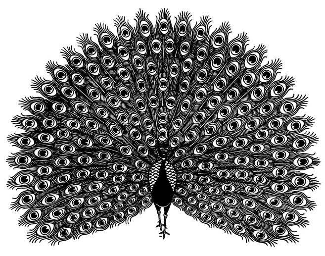 peacock220