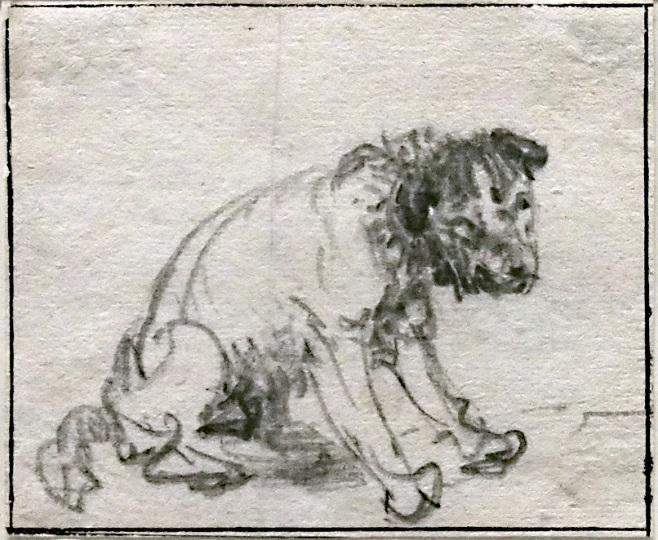 Собака Рембрандта