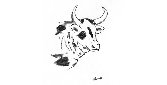 Madiba___s_Nguni_Bull_820hoog