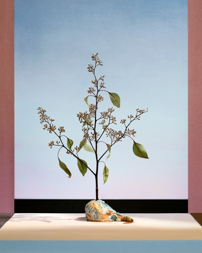 "Alex Yudzon, ""Pear with Tree"". From the ""Still Life"" series"